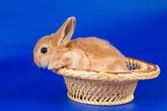 Small fluffy rabbit Stock Photography