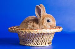 Small fluffy rabbit Stock Image