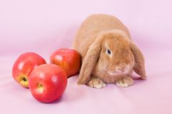Small fluffy rabbit Royalty Free Stock Image