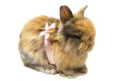 Small fluffy rabbit with pink bow isolated on white royalty free stock images
