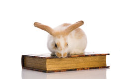 Small fluffy rabbit sitting on a book Royalty Free Stock Photography
