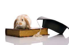 Small fluffy rabbit sitting on a book. White background Stock Photos