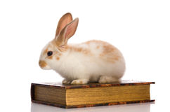 Small fluffy rabbit sitting on book Stock Photography