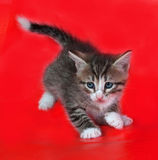 Small fluffy striped kitten plays on red Stock Photos