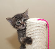 Small fluffy tabby kitten on column Royalty Free Stock Photography