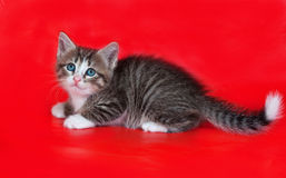 Small fluffy tabby kitten lies on red Stock Photos
