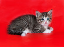 Small fluffy tabby kitten lies on red Stock Images