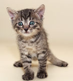 Small fluffy tabby kitten  scared Stock Photo