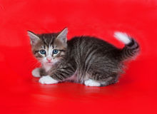 Small fluffy tabby kitten standing on red Stock Image