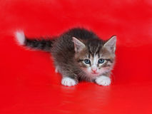 Small fluffy tabby kitten standing on red Stock Images