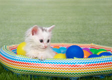 Small fluffy white kitten in a blow up pool Stock Photo