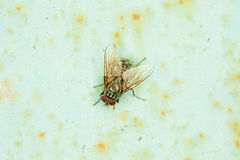 Small fly basks in sun sitting on an wall Royalty Free Stock Photo