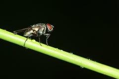 Small fly Stock Photo