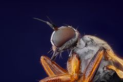small fly head taken with microscope objective   Stock Image
