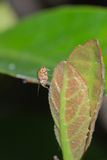 Small fly on leaf Stock Images