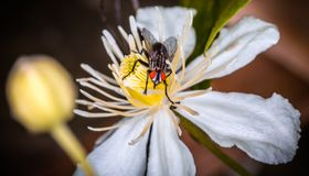 Fly on yellow flower Royalty Free Stock Photography
