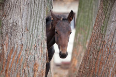 Small foal Royalty Free Stock Photography
