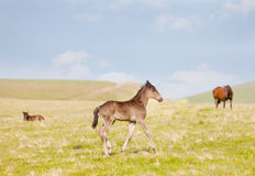 Small foal Royalty Free Stock Images