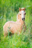 Small foal of horse standing on green background Stock Photos