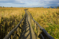 Small footbridge. Walkway through a wetland protected stock images