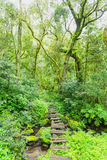 Small footbridge in the forest Stock Photography