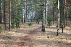 Small footpath in forest. At spring Stock Photo