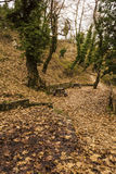 Small footpath in Forest at winter Royalty Free Stock Image