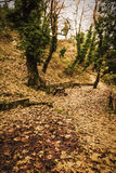 Small footpath in Forest at winter Royalty Free Stock Photo