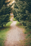 Small footpath in park Royalty Free Stock Images