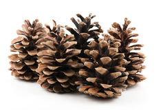 fir cones dry Royalty Free Stock Images