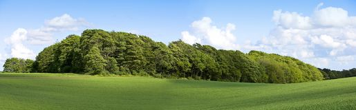 Small forest Royalty Free Stock Photo
