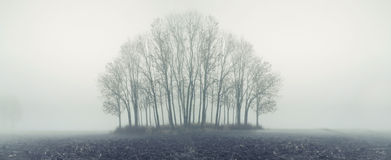 Small forest in autumn foggy day Stock Photo