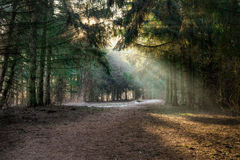 Small forest clearing Stock Image
