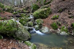 Small forest creek. Flowing through the woods in the winter Royalty Free Stock Photo