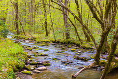 Small forest creek. Small forest creek in Great Smoky Mountains National Park at early spring Stock Photography