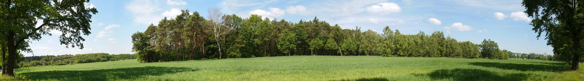 A small forest among farmland-panorama. stock photography