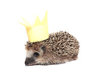 Small forest hedgehog with a crown on the head isolated Royalty Free Stock Photos
