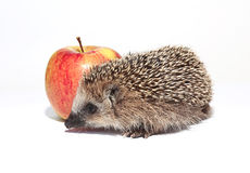 Small forest hedgehog and red apple Stock Photo