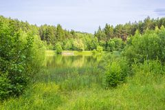 Small forest lake, Belarus. Small forest lake on a summer day, Belarus stock photography