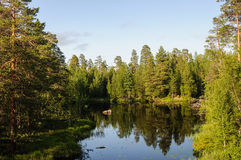 Small forest lake in Karelia Stock Photography