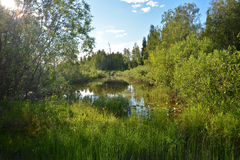 Small forest lake. Stock Photo