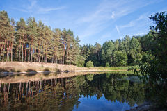 A small forest lake. Reflection of trees in quiet calm water. Sunny weather. Pine forest. Edge of the forest. Blue sky Stock Image