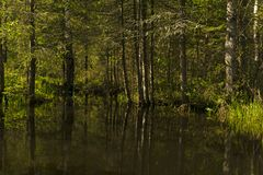 Small forest lake in the shade of trees royalty free stock photography