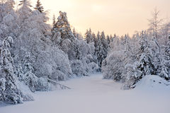 Small forest lake in the snow Stock Photography