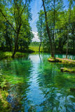 Small forest lake Royalty Free Stock Photo