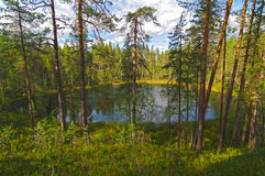 Small forest lake. Royalty Free Stock Images