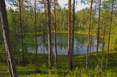 Small forest lake. Royalty Free Stock Photo
