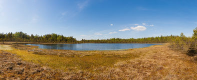 Small forest lake Royalty Free Stock Image