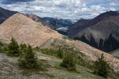 A small forest of larch trees at the top of the ridge. Royalty Free Stock Images