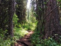 Small forest near kolsai lakes stock photo